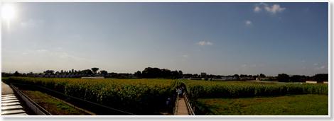 Himawari_panorama
